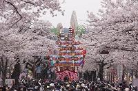 茨城県 日立さくらまつり
