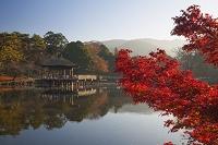 奈良県 紅葉の鷺池と浮見堂 奈良公園