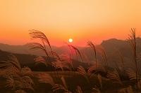 奈良県 曽爾高原のススキの夕日