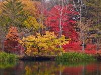 長野県 軽井沢 紅葉の雲場池