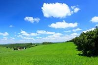 北海道 草原とちぎれ雲