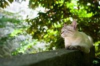 山口県 猫