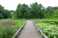 東京都 新緑の神代水生植物園