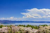 福島県 猪苗代湖と桜