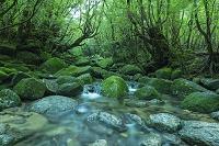 鹿児島県 屋久島 白谷雲水峡