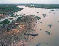 ブラジル パンタナル湿原 ワニ