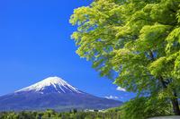山梨県 新緑の河口湖より富士山