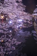 兵庫県 城崎温泉 木屋町通り 夜桜