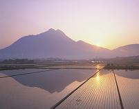 水田に映る朝の由布岳