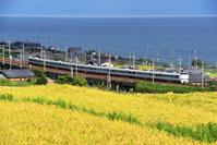 滋賀県 湖西線 琵琶湖沿いの色づいた田園地帯を走る683系特急...