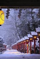日本 京都府 貴船神社 雪景色の参道と春日灯籠
