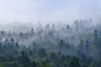 北海道 三国峠からの雲海