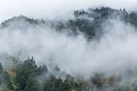 長野県 朝もやに覆われる山