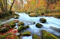 青森県 奥入瀬渓流・石ヶ戸 流れと紅葉