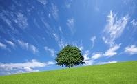 草原の一本木と雲