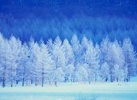 プラント 秋冬イメージ