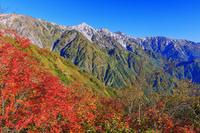 長野県 紅葉の八方尾根より白馬三山