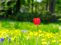 ひっそりと赤い花一つ