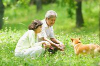 シニア夫婦と柴犬