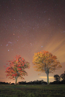 秋田県 大湯環状列石の紅葉の木立と星空