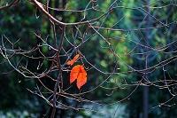 枝先に残る葉