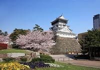 福岡県 北九州市 小倉城の桜
