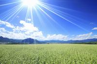 長野県 上田市 塩田平 東山観光農園の蕎麦畑と美ヶ原と独鈷山...