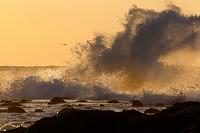島根県 夕照に染まる荒波