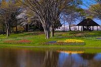東京都 昭和記念公園 春