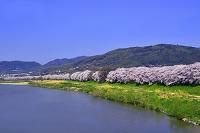 京都府  天王山