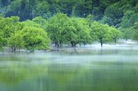 山形県 霧流れる湖水