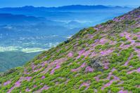 大分県 ミヤマキリシマ咲く平治岳