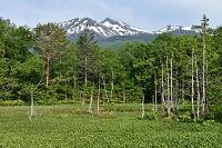 長野県 乗鞍高原 どじょう池