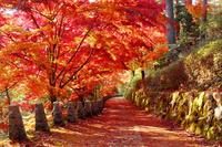 日本 奈良県 吉野山の紅葉