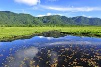 群馬県 尾瀬 中田代の池塘から望む景鶴山