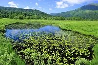 群馬県 尾瀬 上田代の池塘と山並み
