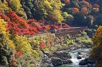 嵯峨野トロッコ列車と保津峡の紅葉