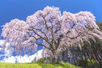日本 山梨県 乙ヶ妻の一本桜