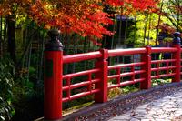 静岡県 修善寺温泉の紅葉と桂川の楓橋