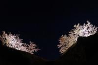 熊野 赤木城跡 去りゆく星座と夜桜
