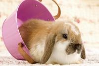 ピンクのバスケットとウサギ