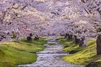 日本 福島県 猪苗代町 桜咲く春の観音寺川