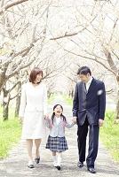 桜並木の下を手を繋いで歩く日本人家族