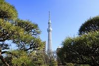 隅田公園から見た東京スカイツリー