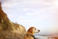 海を眺める犬