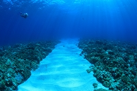 海底の砂地の道とダイバー
