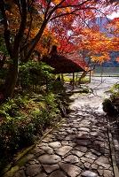 東京都 小石川後楽園 紅葉