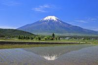 山梨県 残雪の富士山と水田に投影する逆さ富士