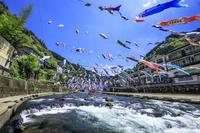 熊本県 杖立温泉の鯉のぼり