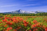 秋田県 桑ノ木台湿原と鳥海山